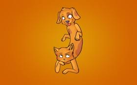 Обои оранжевый, Котопес, фон, CatDog, кот и пес