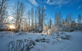 Обои фото, деревья, природа, лучи света, зима, снег, небо