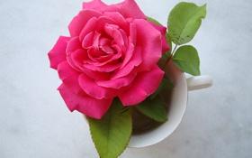 Обои листья, чашка, роза, розовая, фон