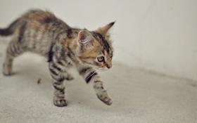 Обои животные, кот, оранжевый, серый, животное, обои, киса