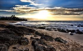 Обои закат, облака, ноги, море, песок, деревья, следы