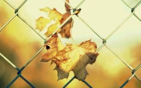 Картинка листья, солнце, макро, фон, сетка, обои, забор