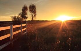 Картинка горизонт, деревья, восход, поле, забор, цветы