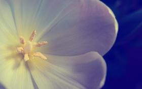 Обои цветок, лепестки, photographer, Паша Иванов