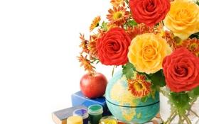 Обои цветы, розы, petals
