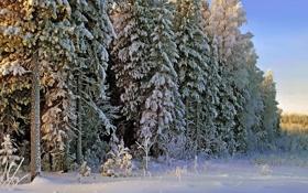 Картинка зима, лес, снег, пейзаж