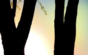 Обои tree, тень, вечер, ветки, деревья