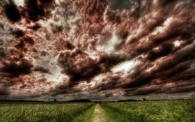Обои дорога, поле, небо, трава, деревья, цветы, фото