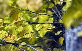 Обои осень, листья, макро, ветки, дерево, листва, ствол