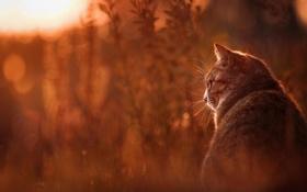 Картинка кошка, животные, лето, трава, кот, природа