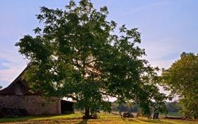 Картинка листья, лучи, свет, деревья, скамейка, природа, дом