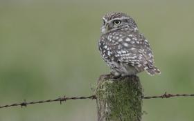 Картинка сова, птица, столб, колючая проволка, совенок