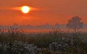 Обои поле, закат, цветы, оранжевый, дерево, ромашки, Вечер