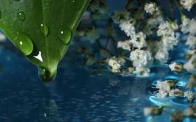 Картинка вода, капли, макро, цветы, отражение, листок