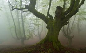 Картинка лес, пейзаж, природа, туман
