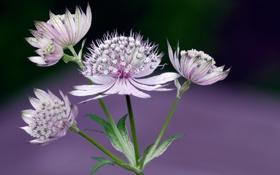 Обои макро, природа, растение, стебель, экзотика, соцветие