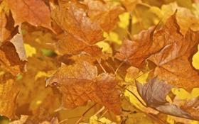 Обои осень, листья, макро, краски, божья коровка, насекомое