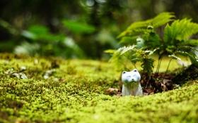 Обои зелень, кошка, ростки, статуэтка
