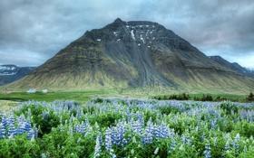 Обои цветы, гора, долина