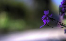Обои цветы, green, Purple