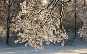 Обои зима, ветка, обледенение