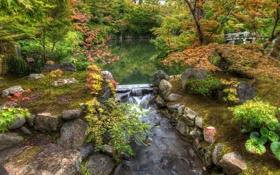 Обои деревья, парк, камни, речка, мостик