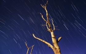 Обои небо, природа, дерево
