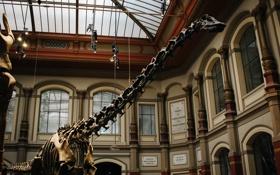 Картинка динозавр, скелет, музей