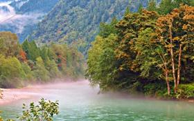 Картинка лес, горы, туман, река, национальный парк, штат Вашингтон