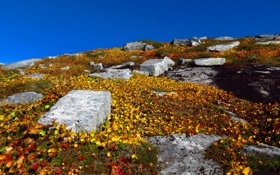 Обои небо, листья, камни, растения, желтые, холм
