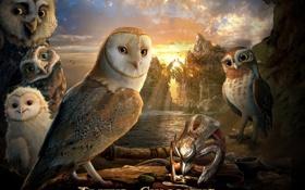 Обои совы, Легенды ночных стражей, Сорен