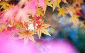 Обои листья, природа, цвет, размытость