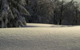 Обои зима, снег, деревья, фото, дерево, утро, сугробы