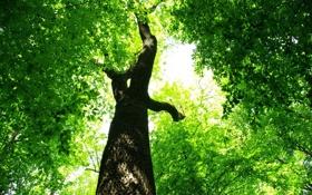 Обои листья, ярко, ствол, зеленый, листва, дерево
