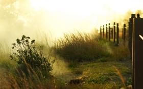 Обои лето, трава, забор, утро, grass