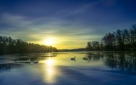 Обои зима, озеро, лебеди