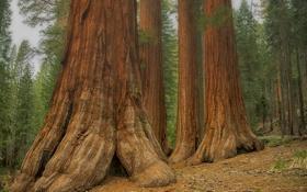 Обои лес, деревья, склон, ствол