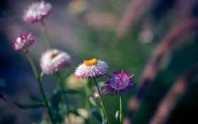 Обои цветы, природа, фон, обои, растения, лепестки, цветения