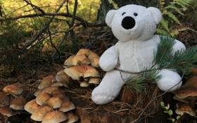 Обои лес, белый, настроение, игрушка, грибы, мишка, пенек