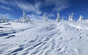 Картинка пейзаж, деревья, холм, природа, небо, зима