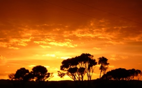 Обои небо, деревья, закат, силуэт