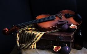 Обои музыка, Violin, Figs