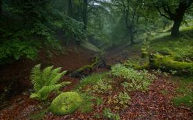 Обои лес, листья, деревья, чаща, полумрак, ложбина
