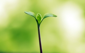 Обои hope, зелень, листок