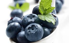 Обои ягоды, fresh, blueberry, голубика, berries