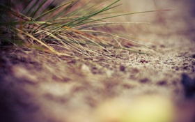 Картинка песок, трава, близко
