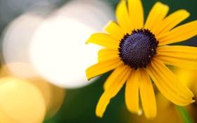 Картинка цветок, макро, желтый, ромашка, боке