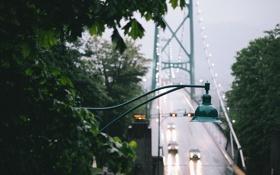 Обои листья, мост, туман, дерево, фонарь
