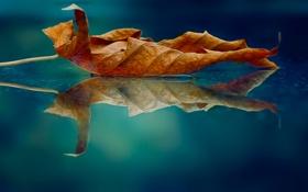 Картинка отражение, лист, обработка