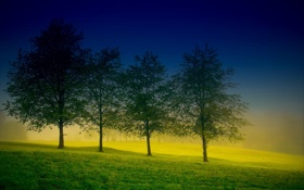 Обои поле, природа, дерево, три